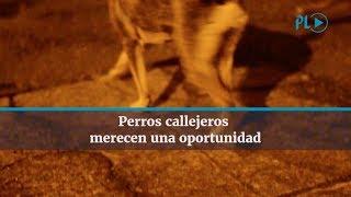 Perros abandonados y falta de programas de esterilización provocan sobrepoblación canina en las calles, algunos incluso con problemas de salud. (Video Prensa Libre, A. Ola, D. Castillo