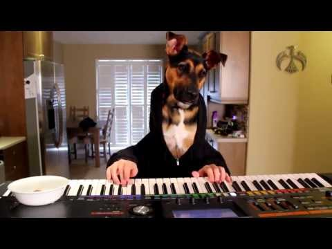 Dog Plays A Waltz