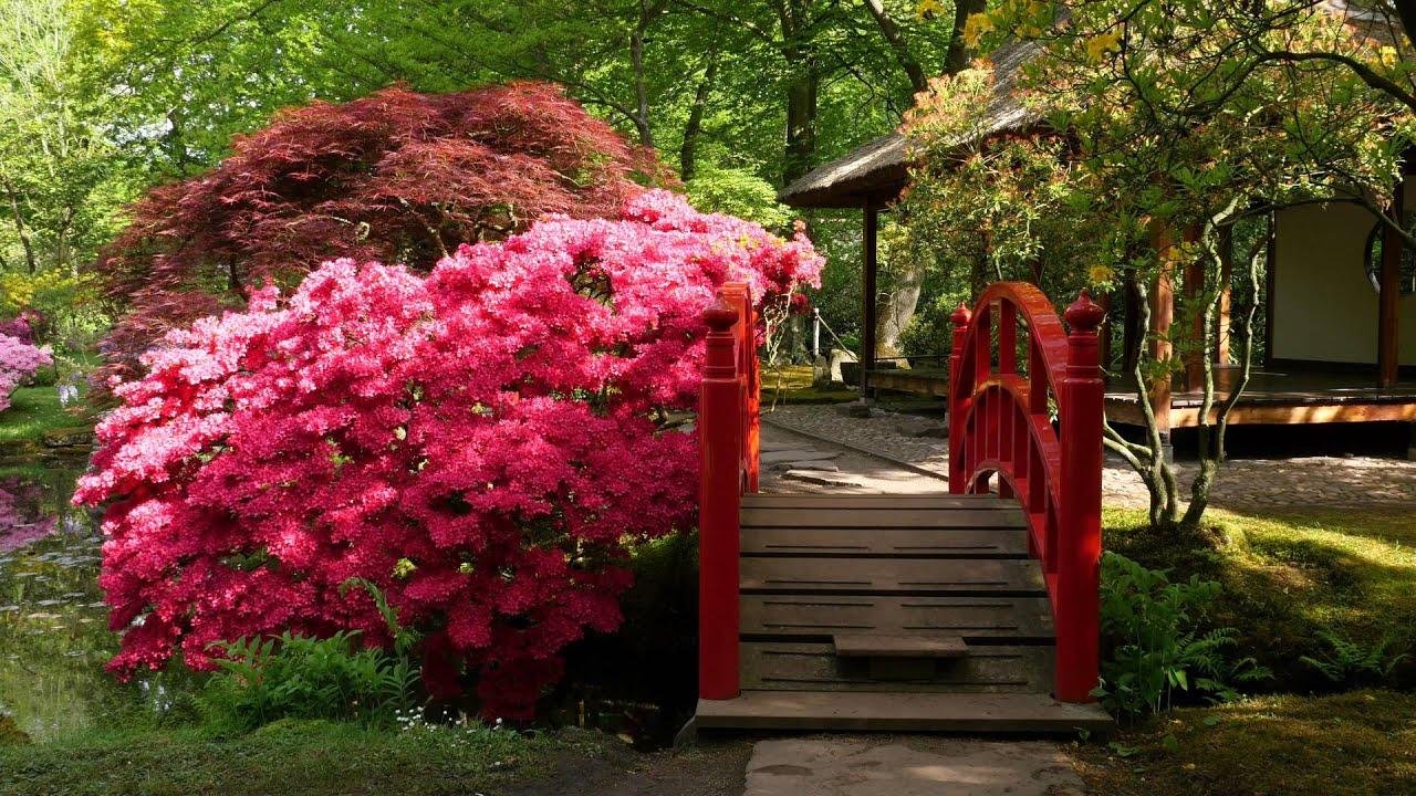 Japanse tuin op landgoed Clingendael