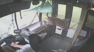 Deer smashes through bus windscreen