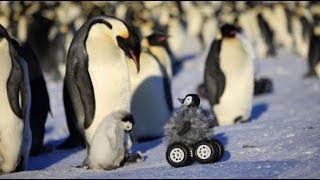 Baby Robot Penguin ...For Science!