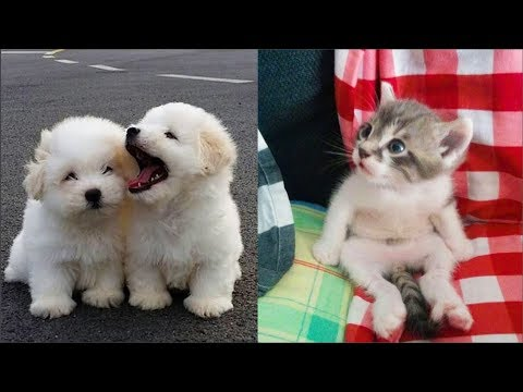 Cute baby animals Videos Compilation cute moment of the animals Soo Cute! #44 - Thời lượng: 11:36.