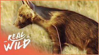 Video Ghosts Of The Great Salt Lake [Brown Hyena Documentary] | Wild Things MP3, 3GP, MP4, WEBM, AVI, FLV Januari 2019