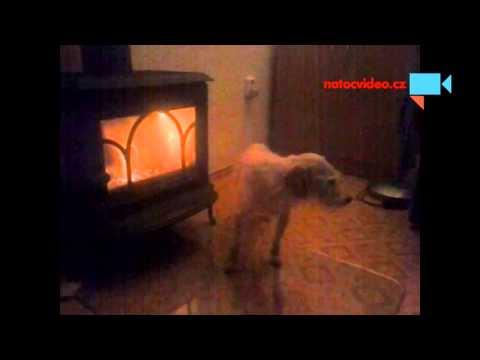 I pes se musi ohřát.
