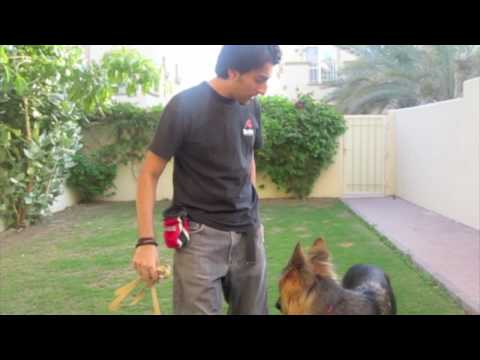 stopping your dog from pulling - While there are many dogs that pull on walks, any dog can learn to walk calmly on a loose leash if we create a positive learning environment and teach them i...