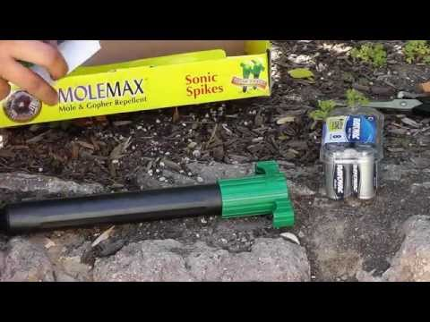 How to keep Chipmunks, Squirrels, Mice, Moles & Gopher away