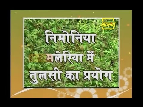 Ayurvedic Benefits of Tulsi for Pneumonia & Malaria
