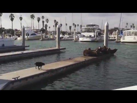 pies-sprzata-towarzystwo-na-molo