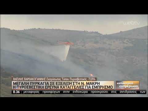 Καταγγελίες για εμπρησμό ερευνά η Πυροσβεστική | 05/09/2019 | ΕΡΤ