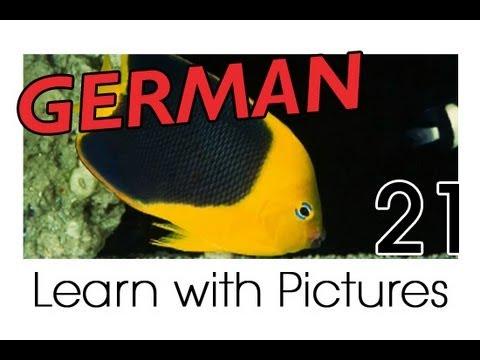 Learn German – Marine Animals Vocabulary