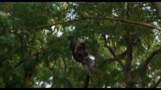Nonton Kamui The Lone Ninja  2009  Film Subtitle Indonesia Streaming Movie Download