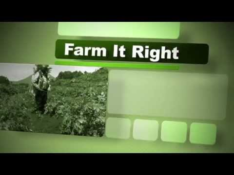 Farm It Right: Planting and management of maize
