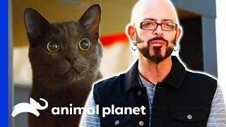 This Kitten Needs Activity Or Else He'll Misbehave! | My Cat From Hell by Animal Planet