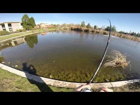 Pond Bass Fishing using a River2Sea Yabbie