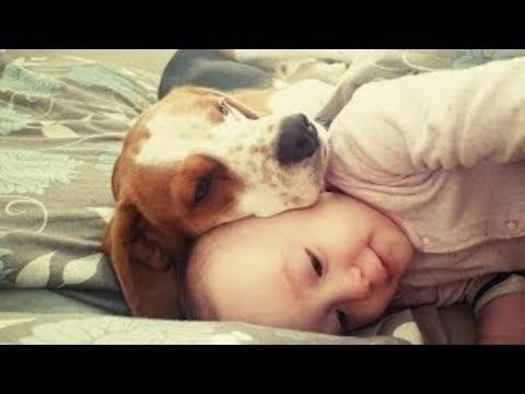 beagle e bambini - innocente amore!