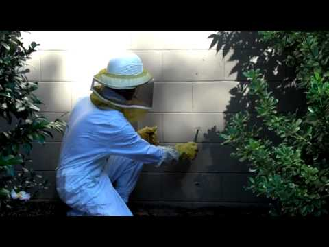 Yellow Jackets In The Wall (видео)