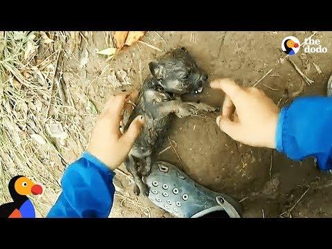 Totalnypsychol bez serca wyrzucił szczeniaka do rzeki. Wędkarz podjął próbę ocalenia życia pieska