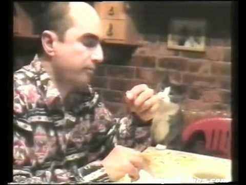 gatto comunica col padrone sordo attraverso la lingua dei segni!