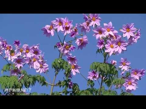 偉業伝える花の公園 ウェルネスパーク五色