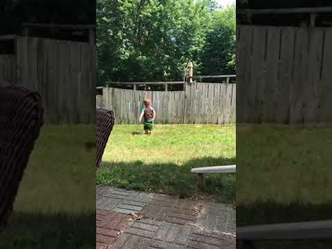 Lapsi leikkii naapurin koiran kanssa pallolla – Aita ei haittaa menoa