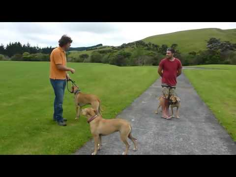 Video How to stop Dog Aggression quickly And easily - In a few steps! download in MP3, 3GP, MP4, WEBM, AVI, FLV January 2017