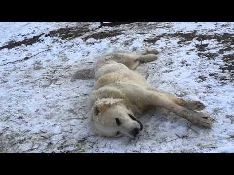 Nama: таджик durasi: 2 menit 27 detik bitrate: 128 kbps upload date: 24 february 2009 dilihat: 332060 favorit