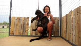 Woman Playing With A Black Leopard - Unbelievable!