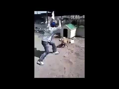 惡有惡報!男伸腳狠踹狗 下秒竟然…