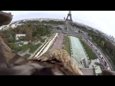 le - Dans le cadre du projet Freedom le film, un pygargue à queue blanche a pris son envol depuis le sommet de la tour Eiffel équipé d'une caméra embarquée. Découvrez les images exceptionnelles...