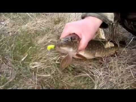 видео ловля щуки ранней весной на малых реках видео