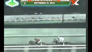 RACE 7 DIAMONDS GOLD 09/14/2014