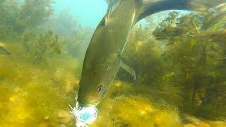 Video SUPER CLEAR Underwater Sight Fishing!   Bed Fishing Tips for Bass MP3, 3GP, MP4, WEBM, AVI, FLV Januari 2019