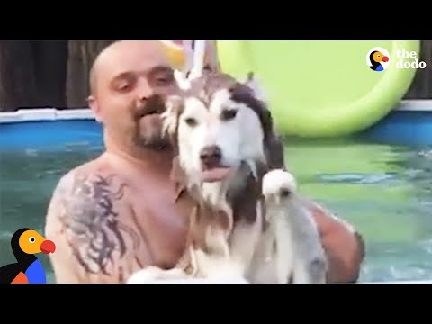 Husky Dog Jumps Into Pool To Be With Dad | The Dodo