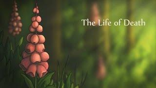 A vida da Morte - The Life of Death - Marsha Onderstijn