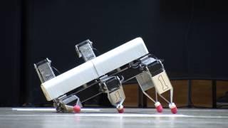 Robotspinnen strijden op NHL Hogeschool