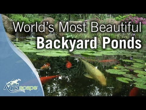 pond - Aquascape presents our new 2012 Create a Paradise video featuring inspirational footage of some of the most beautiful ecosystem ponds in North America. Follo...