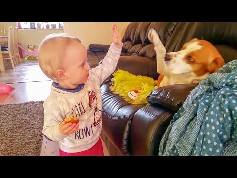這位小男孩跟狗狗挑戰擊掌,網友直呼這畫面也太可愛了吧!