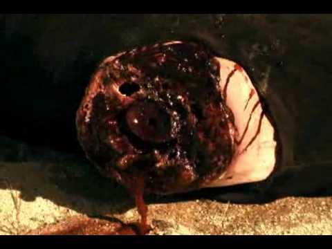 Lair of the minotaur - War metal battle master online metal music video by LAIR OF THE MINOTAUR