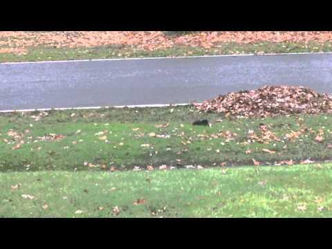 Meet 'Tippy' The Fainting Squirrel!