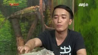 Kỳ 2: Giới thiệu về thú cưng Bò Sát tại Việt Nam - Thú Cưng TV