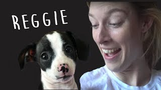 here is ayydubs video! https://www.youtube.com/watch?v=zjFqH-gPkPAGET MERCH HERE ► https://carlyanderin.com/Subscribe for more Vlogs ► https://www.youtube.com/channel/UC8CB...Reggie has an instagram!:@ReggieTheWeenUber codes:CARLY: carlyi229euERIN: ering6049ueFOLLOW OUR IG:@carlyanderinPOBOX:Carly and ErinPO BOX 292265Los Angeles, CA 90029Erin Gilfoy:Instagram: eringilfoyTwitter: goddess_eriuSnapchat: erin_gilfoyFacebook: Erin GilfoyCarly Incontro:Instagram: carlyincontroTwitter: carlyincontroSnapchat: pooopflingerFacebook: Carly Incontro