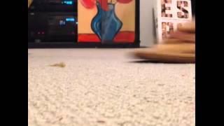 Kedi Sandle Sıkışmış Diğer en popüler videolarımız için http://www.enpopulervideo.besaba.com dan takip edebilirsiniz.