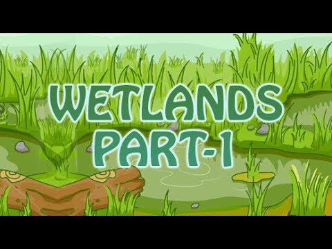 Lands |  Wetlands | Water Lands | 2D Animated | Part 1