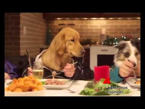 un micio e 13 cani, cena di natale 'bestiale'...