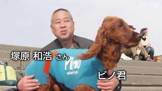 【神奈川】人間顔負け!見事なライディングを見せるサーフィン犬