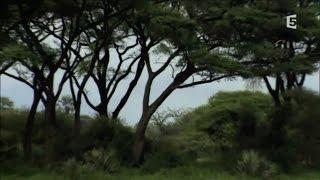 Video Dikeledi, le leopard qui ne veut pas quitter sa mere MP3, 3GP, MP4, WEBM, AVI, FLV Agustus 2017