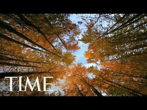 Autumn Equinox 2017: Why Friday Is The First Day Of Fall In The Northern Hemisphere | TIME