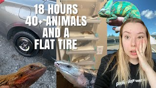 Driving 18 Hours With 40+ Animals! + We Got A Flat Tire | Moving Vlog #2 by Emma Lynne Sampson