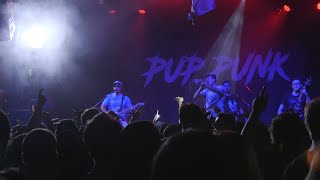Pup Punk is COMING to Boston