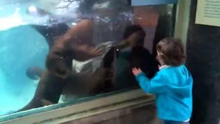 Nutrias persiguiendo a una niña en el zoo